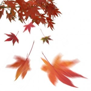 stock-photo-222740-falling-leaves