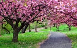 Nature___Seasons___Spring__038259_